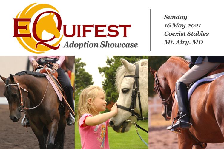 EquiFest Adoption Showcase - 16 May 2021