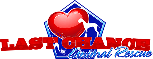 Last Chance Animal Rescue