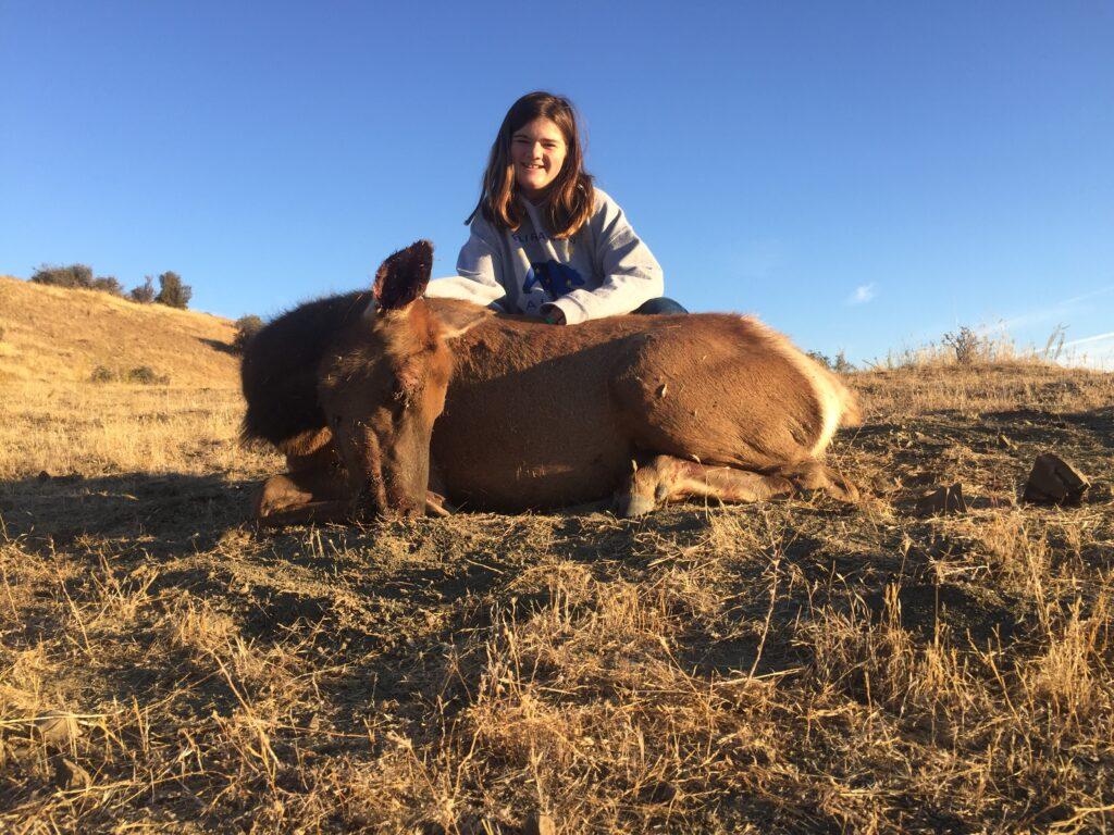 Tule Elk Cow