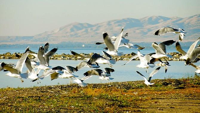 "Utah Lake: ""No. 1 birding spot in Utah County"""