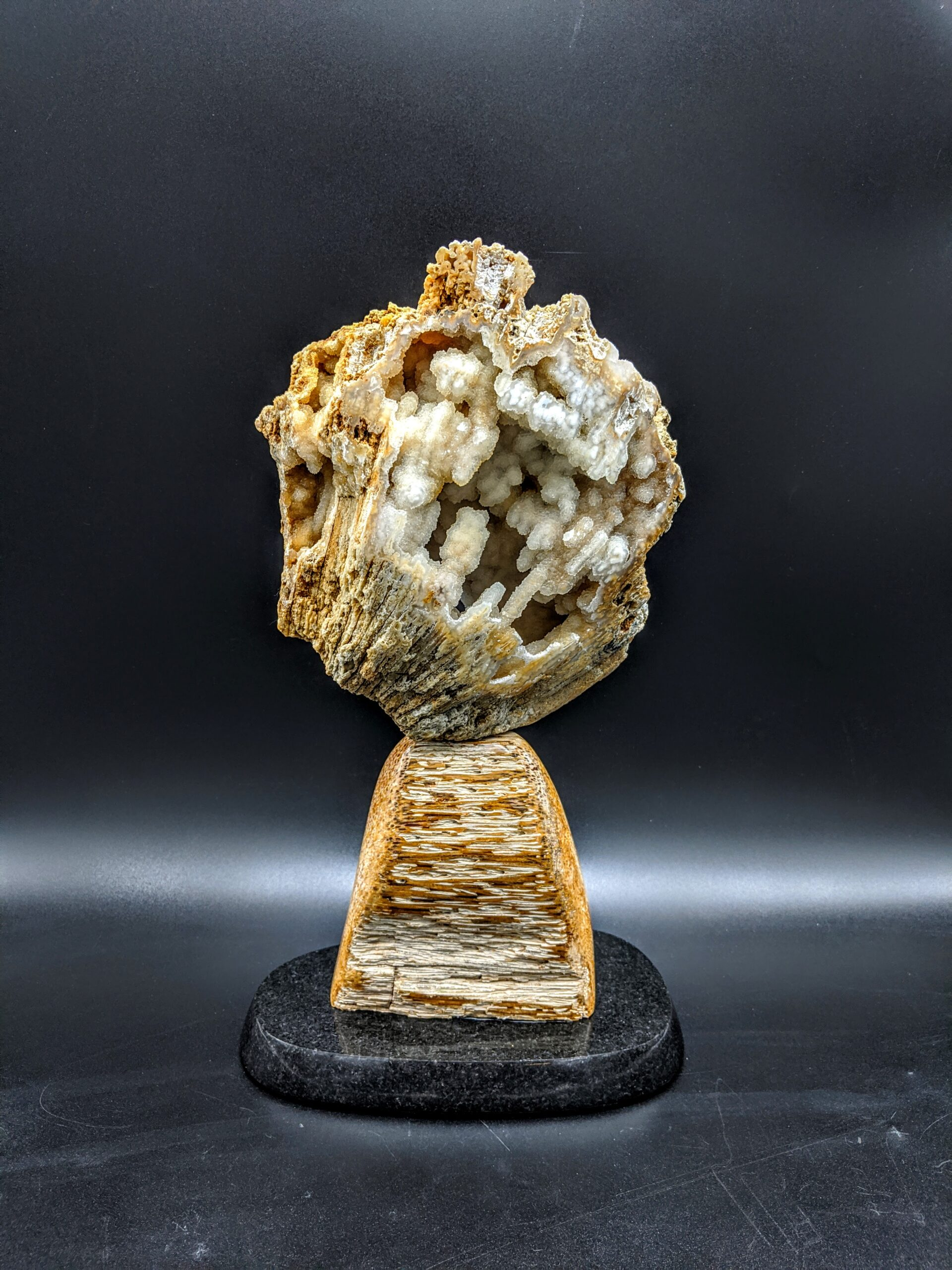 Agatized Coral with Palm Root sculpture