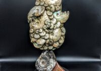 Ammonite Fossil Sculpture
