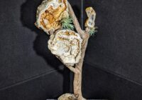 Agatized Coral and Drift wood