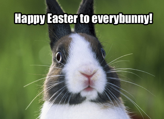 Happy Easter EveryBunny