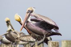 Pelicans 3-5-15-6