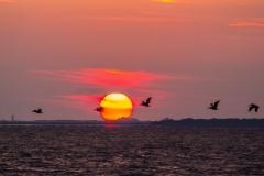 8-14 Sunset-5