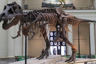 sue skeleton 990x610