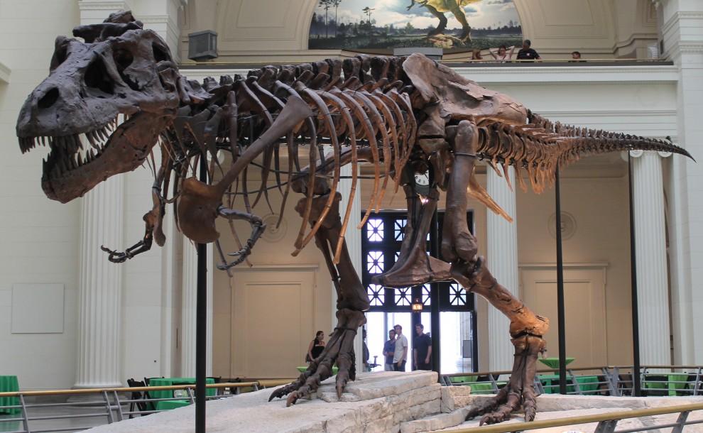 sue skeleton