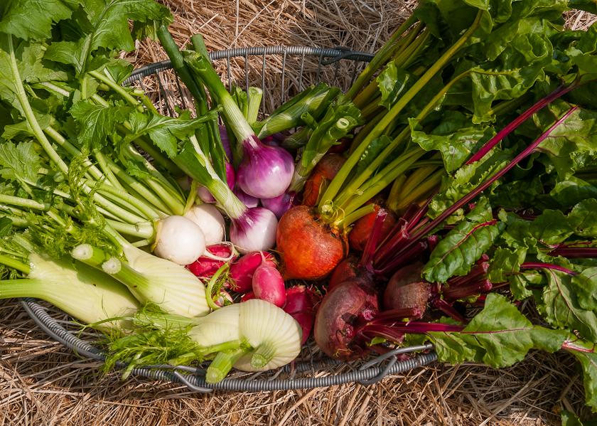 vegetable-stilllife