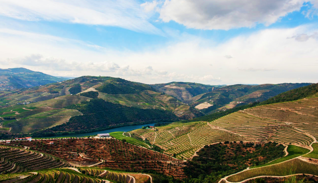 WINES A-to-Z | Your Guide to Portuguese Grapes