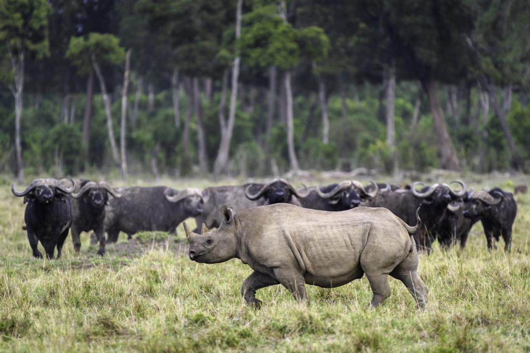 masai mara 2017 02 187
