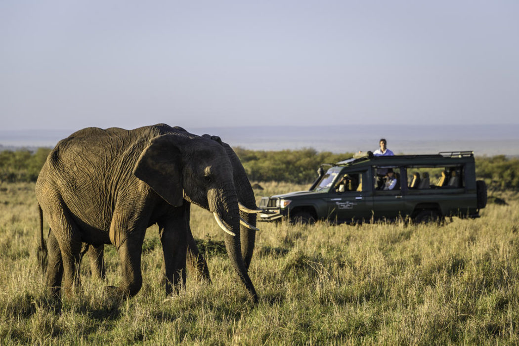 masai mara 2017 02 64