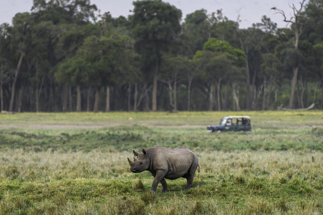 masai mara 2017 02 76
