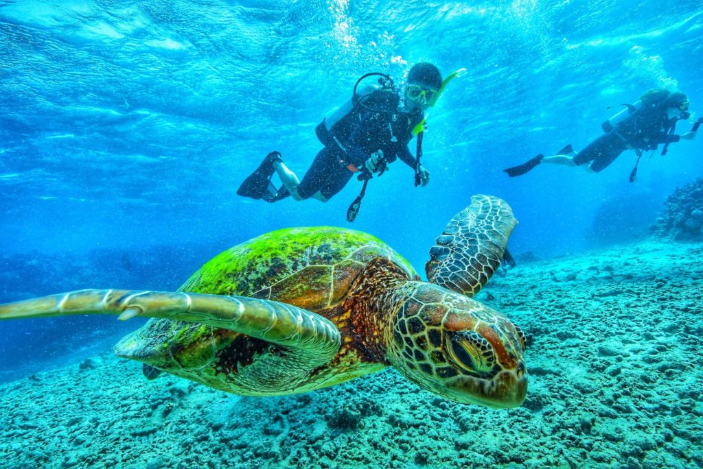 turtle australia underwater vacation scuba diving queensland greatbarrierreef padi brisbane australia t20 eonEvK