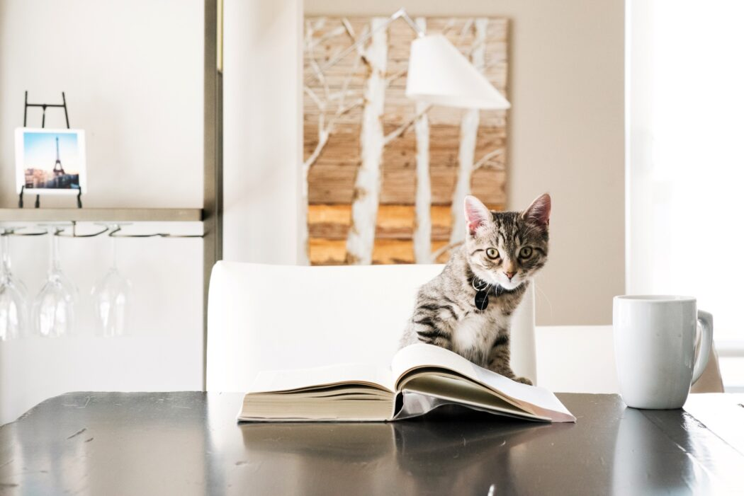 cat reading a book with a coffee at the kitchen table t20 Llx92Z