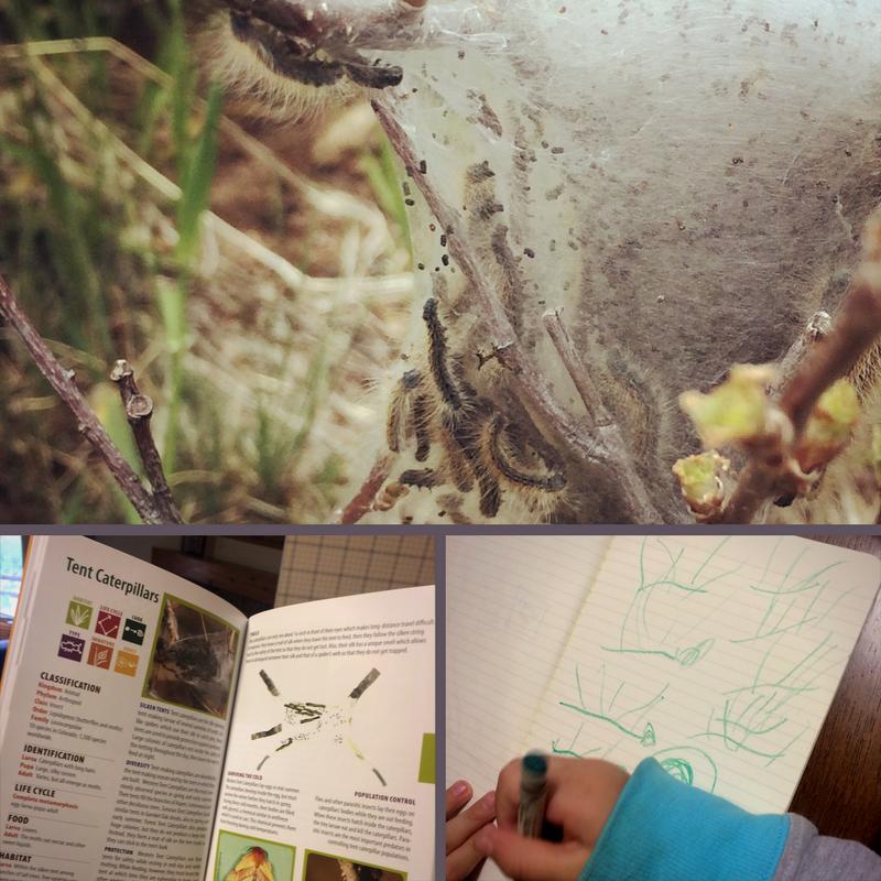 curiosity driven nature study