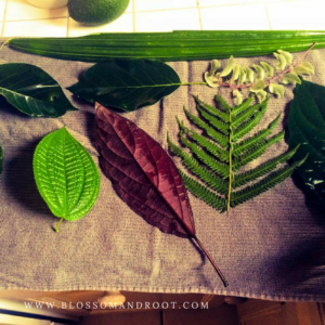 nature study for homeschoolers in the suburbs