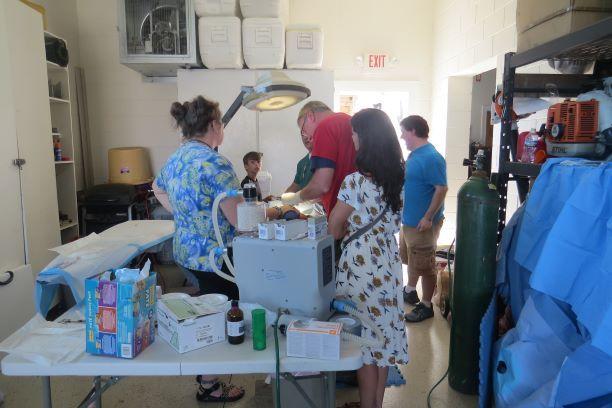 The veterinary team from Boone, N.C., spays a female Ocracat. From left, Joanna Burkett, veterinary technician, Kevin Johnson, Dr. Howard Johnson, Mariesa Johnson and Garrett Burkett. Photo by Rita Thiel