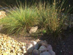 DIY Grey Water Wetland