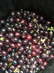 ripe sweet box berries