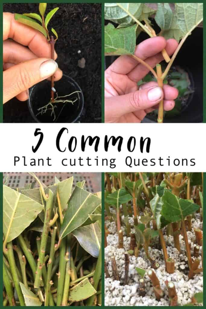 5 plant cutting questions