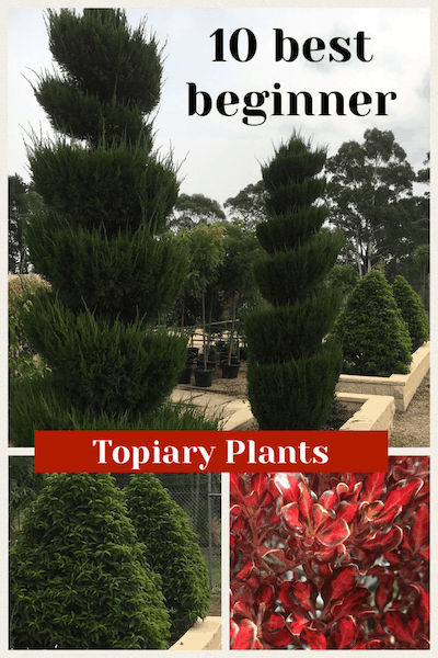 10 best topiary plants for beginners