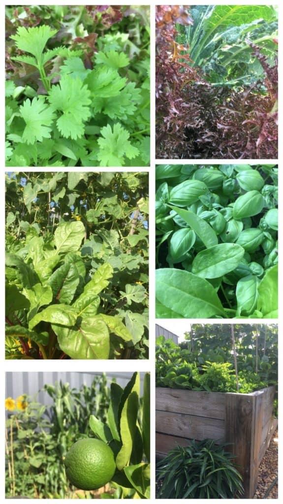 Veggie Garden-Everyday Wits