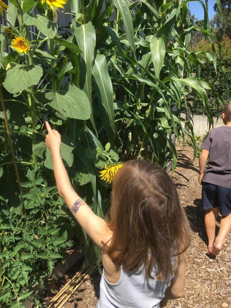 Kids amazed by the plants growth