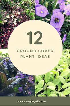 12 ground cover plant ideas
