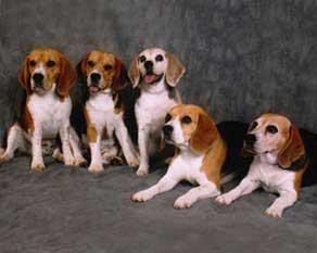 craig-dogs