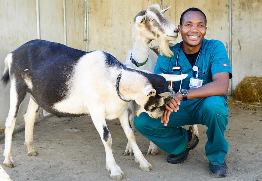 Associate of Science – Veterinary Science