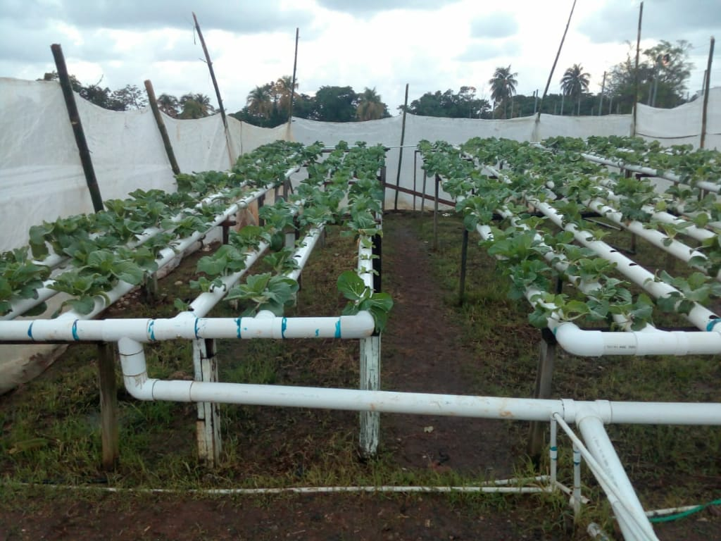 Bachelor of Technology – Agricultural Production and Food Systems Management