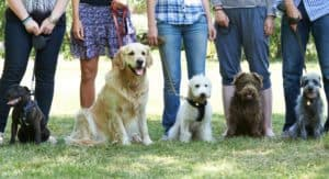 Phoenix Dog Training Blog Phoenix Dog Trainer