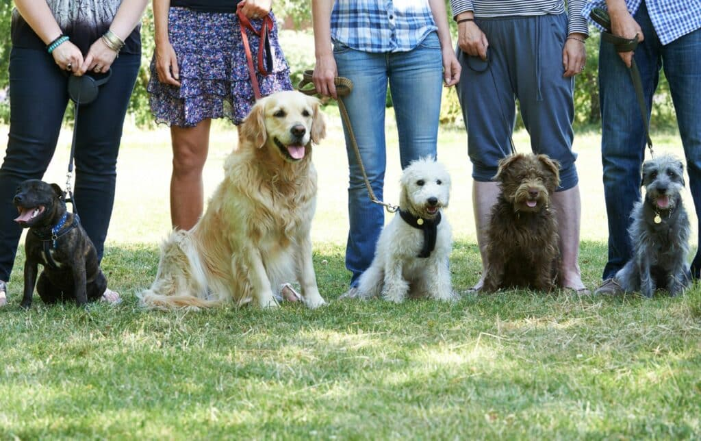 DOG OBEDIENCE CLASSES