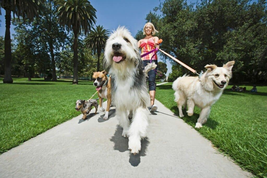 Phoenix Dog Training | Top 10 Dog Training Mistakes