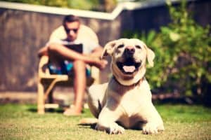 Phoenix Dog Training how to teach a dog to stay