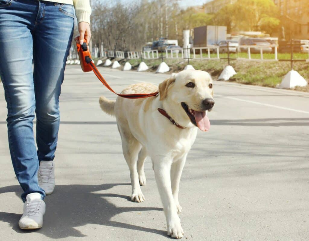 Should I Use Negative Reinforcement to Train My Dog?