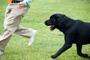 Dog Obedience Training Phoenix