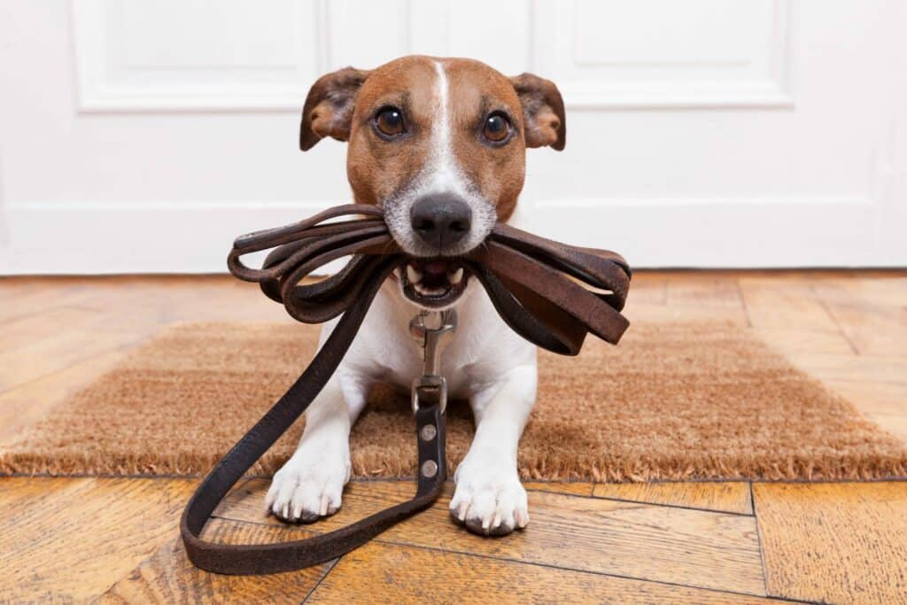 PHOENIX DOG TRAINING | PHOENIX DOG BEHAVIORIST