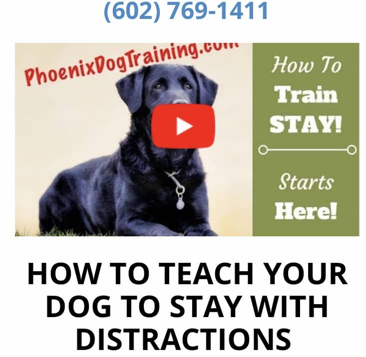 HOW TO TEACH A DOG TO STAY VIDEO