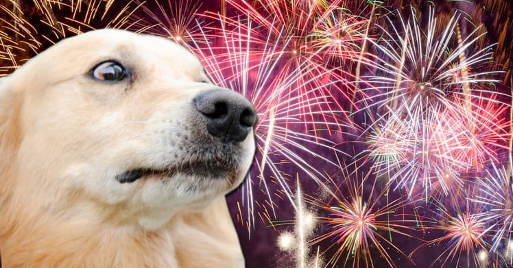 Dogs and Fireworks: How to Keep Your Dog Calm During Fireworks Anxiety