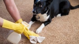 how to potty train a puppy clean up