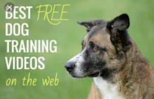 Dog Training Videos