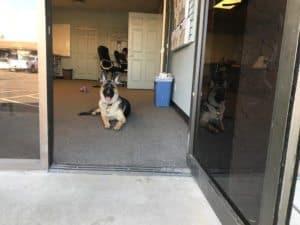 Dog Door Saftey