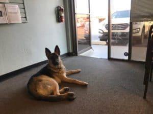 Dog Training Door Manners