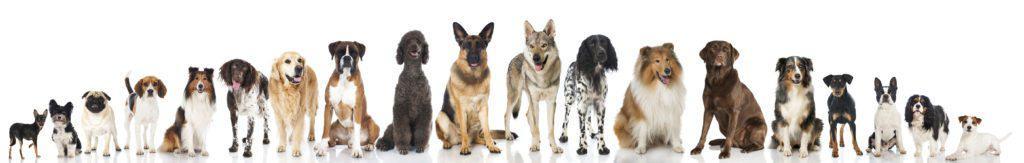 Dog Training Casa Grande Az
