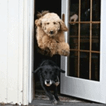How to stop a dog from running away door dashing door manners