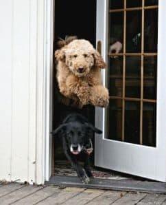 How to stop a dog from running away door dashing door manners