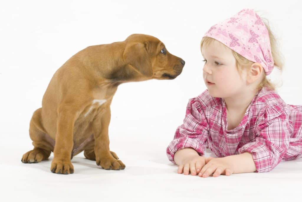 dogs and babies training