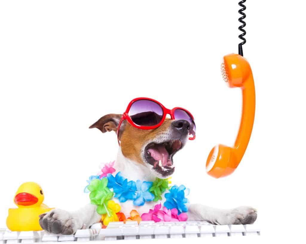 phone dog training consultations
